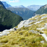 Harris Saddle on Routeburn Track