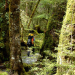 Tranping on the Routeburn Track